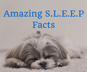 Amazing and Funny Sleep Facts